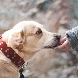 How to treat your dog's fleas