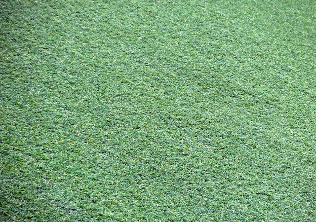 Why Using Sydney Synthetic Grass Providers Is The Right Choice For Homeowners